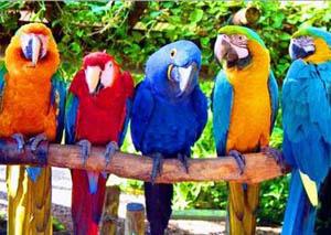 Какой попугай лучше говорит