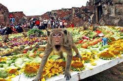 Самый необычный праздник обезьяний фуршет