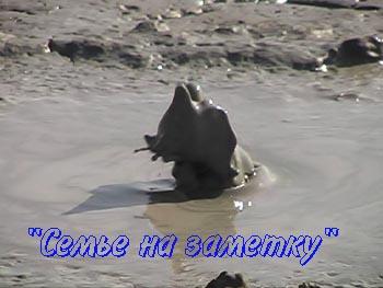 Фонтан глины из грязевого вулкана в Крыму