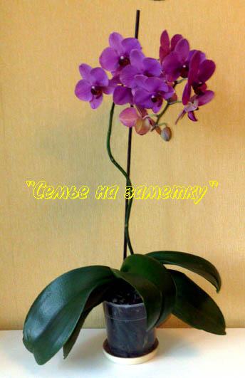 Можно ли выносить орхидею на улицу летом