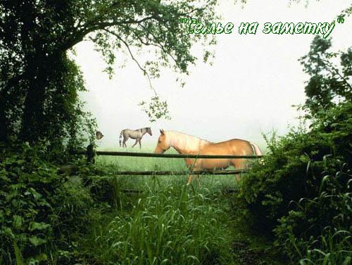 Лошади на живой фотографии с природой