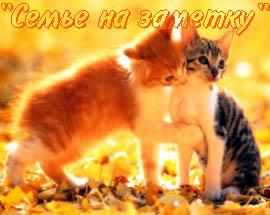 Осенний привет (музыкальная анимационная открытка)