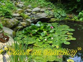 Красота воды в природе Живые фотографии