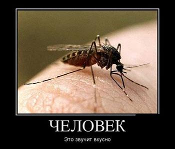 Комар кусает