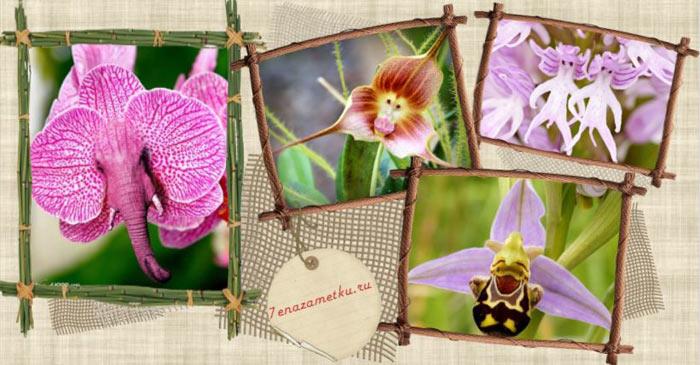 Причудливые цветы орхидей