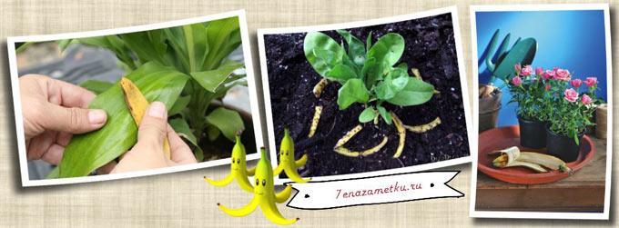 Как использовать банановую кожуру в качестве удобрения