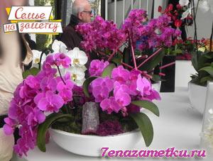 Самые красивые орхидеи в парке Кекенхоф Нидерланды
