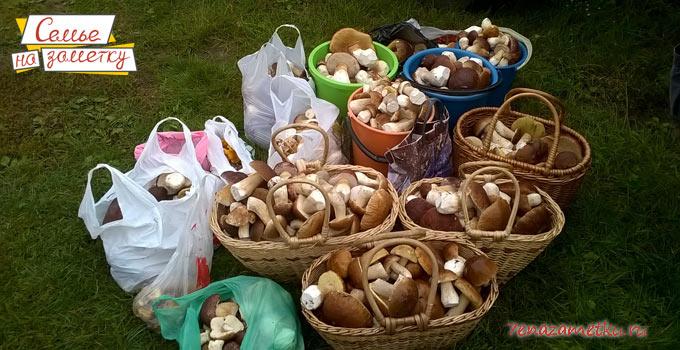 Корзины с грибами