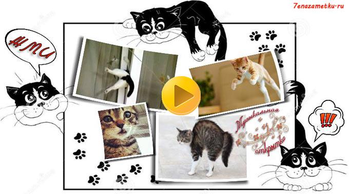 Музыкальная открытка о кошках