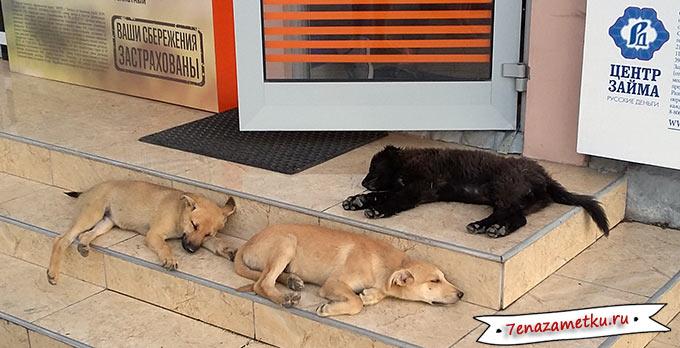 Спящие собаки в Керчи