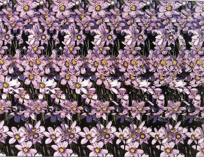 Параллельная стереокартинка цветок