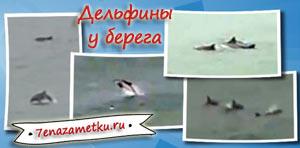 Дельфины у берега в Крыму