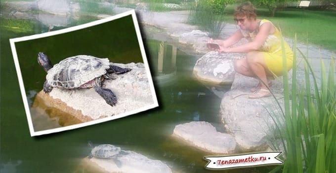 Живые черепахи в Айвазовском