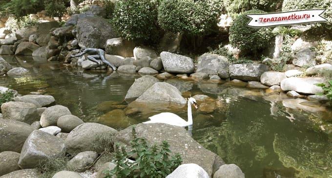 Живые лебеди и скульптура нарцисса в пруду парка Айвазовское