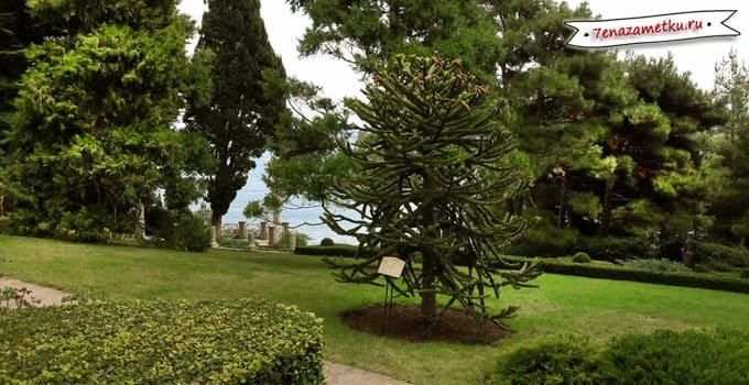 YНеобычные деревья в парке Айвазовское
