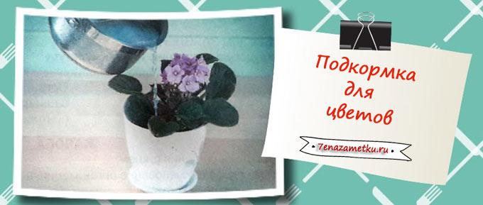 Вода от сваренных макарон в качестве подкормки для цветов