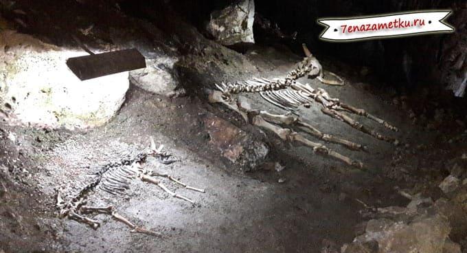 Скелеты в Мамонтовой пещере в Крыму